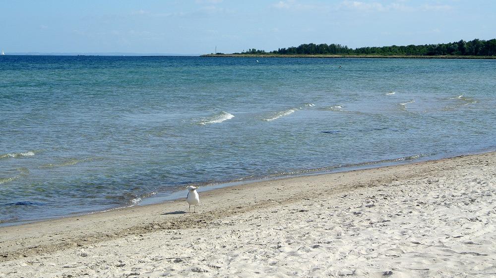 Strand und Möwe